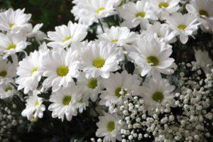 fleurs-blanche-marguerite-et-muguets